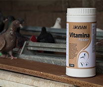 Royal Pigeon Products
