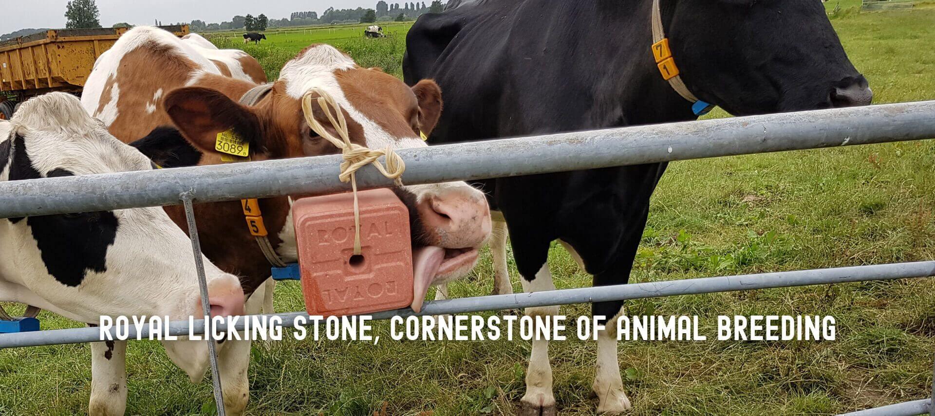 Royal licking stone, touchstone of animal husbandry