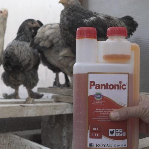 Pantonic