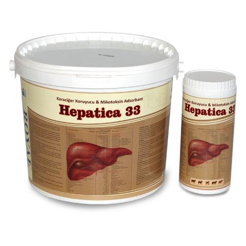 Hepatica 33