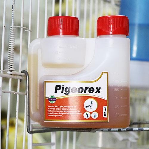 Pigeorex
