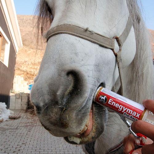 Royal Horse EnergyMax Pre-Race