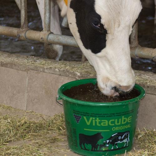 Vitacube Original
