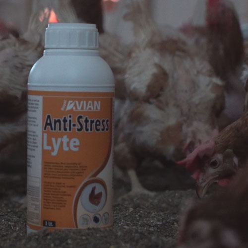 Anti-Stress Lyte